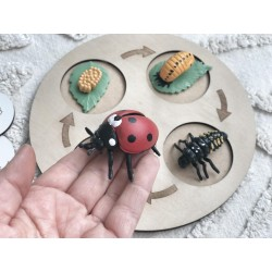 """lady bug"" LIFE CYCLE MINI..."