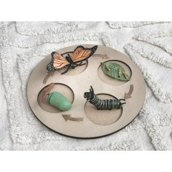 """""""BUTTERFLY"""" LIFE CYCLE MINI..."""